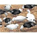 Real Geese Blue & Snow Goose Decoys Image
