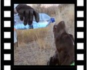 Keeping Your Hunting Dog Properly Hydrated Image