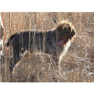 Helping You Get the Most From Your Hunting Dogs