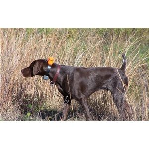 1000+ images about Black German short haired pointers on ...  |Black Ticked German Shorthaired Pointer Puppies