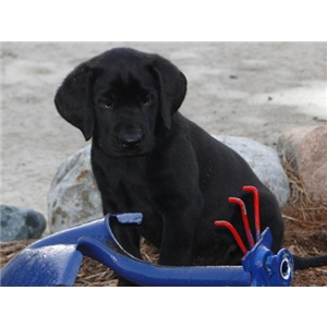 poseyville black personals Dogs, cats, puppies, kittens, and even more exotic pets from poseyville, in are available for sale or adoption topix encourages humane pet adoption make sure to have your pet spade or neutered .