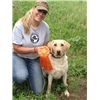 Seasoned hunting retriever ylf 4yr  Image