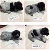 German Shorthaired Puppies for Sale Image