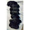 AKC Black Lab Puppies SH/JH Image