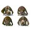 Bonds You Can Bet On (American Kennel Club Insured, GSP Pups)  Image