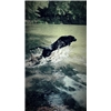 *** # 1 DUCK DOGS - STARTED RETRIEVERS *** Image