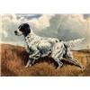 English Setter Puppies Image