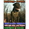 *** #1 DUCK DOGS - GREAT HUNTERS *** Image