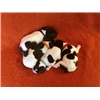 AKC German Shorthaired Pointer Puppies Image