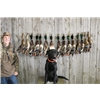 2 yr. old Registered Black Lab Ready to Hunt  Image